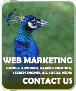 Contact Us for web marketing services in Chelmsford Essex